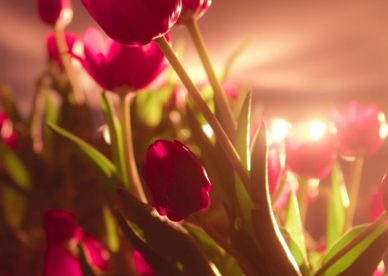 Red Flowers Photo Free Download HD Wallpapers Backgrounds Images